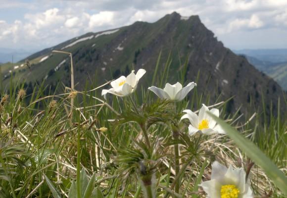 Die Wanderer rasten am Bergkreuz im Naturpark Nagelfluhkette.
