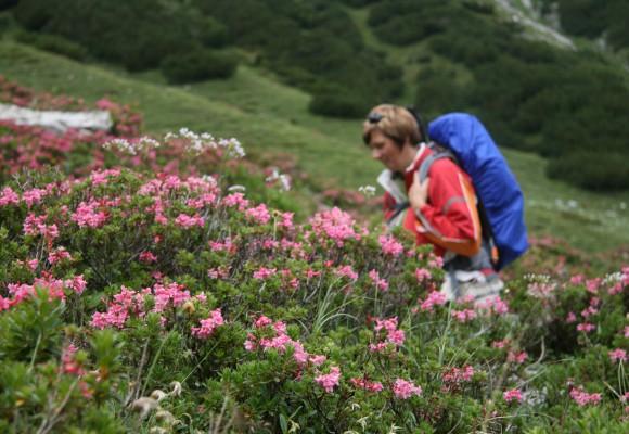 Gruppe beim Wandern auf Alpenwegen.